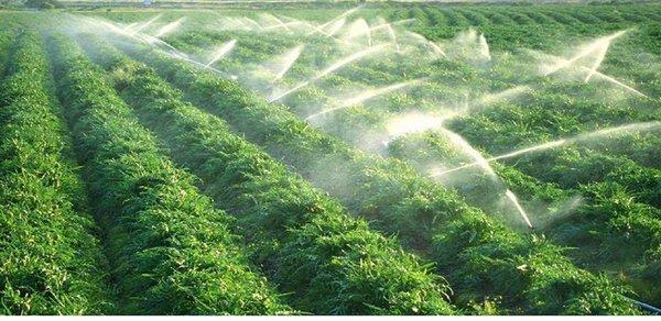 Máy bơm nước nông nghiệp phục vụ tưới tiêu